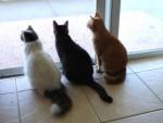 animali buffi da tenere in casa